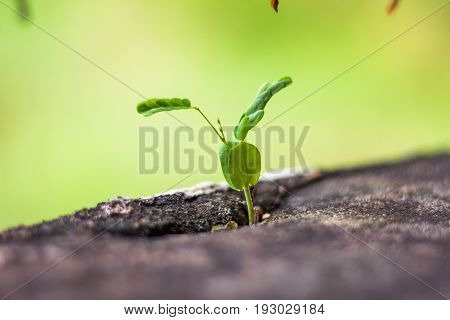 Tree germinated on the wall green  plant natuer