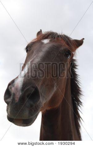 A Horse'S Attitude