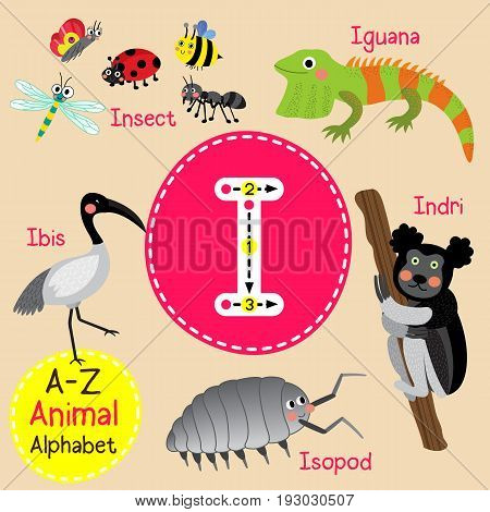 Cute children zoo alphabet I letter tracing of funny animal cartoon for kids learning English vocabulary vector Illustration.