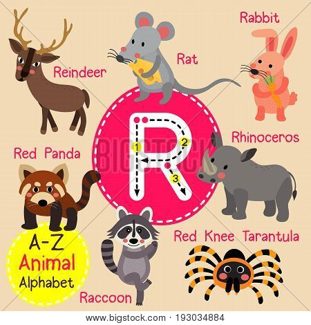 Cute children zoo alphabet R letter tracing of funny animal cartoon for kids learning English vocabulary vector illustration.