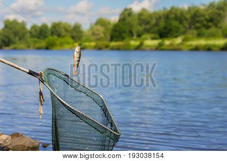 Trophy fishing. Small fish on fishing line, an old, used fish landing net, sunny landscape with water. Concepts fortune, success, active rest, irony, countryside relaks,