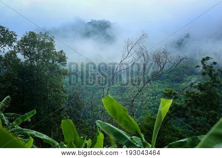 Morning fog in a wild tropical rainforest in Kaeng Krachan national park Thailand