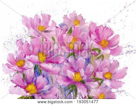 Bouquet of pink cosmos flowers. Oil painting on Canvas. Isolated on white background