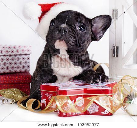 French bulldog in santa hat