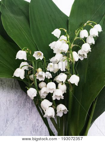 Lily of the valley bouquet with green leaves