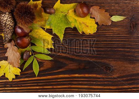 Autumn foliage with chestnuts and tree cone on wooden table from above. Fall background.