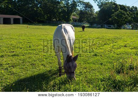 A horse wearing a plaid facemask and matching boots grazes in the grass