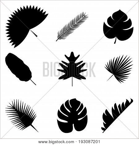 Palm leaves Vector illustration Exotic and tropical plants Set of different palm leaves silhouettes isolated on white background