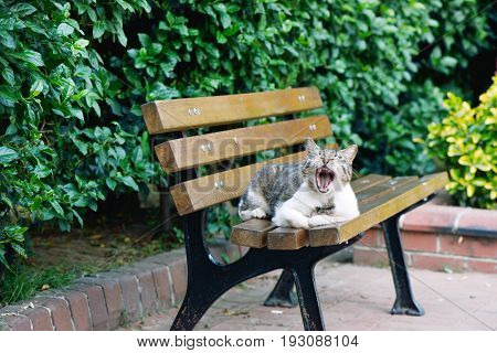Homeless cat sittin on a wooden sit in a park