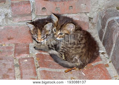 Homeless kittens sleeping on the ground in a park