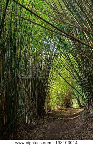 Mysterious pathway in bamboo forest under sunlight