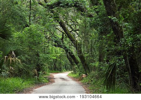 Walkway through dense tropical forest in Florida