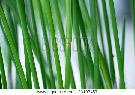 vegetation consisting of typically short plants with long narrow leaves, growing wild or cultivated on lawns and pasture, and as a fodder crop