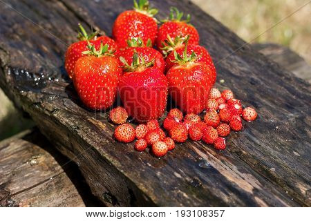 rip red strawberries and wild strawberries on wooden backgroung