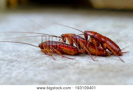 Relation concept : cockroach lover on concrete floor