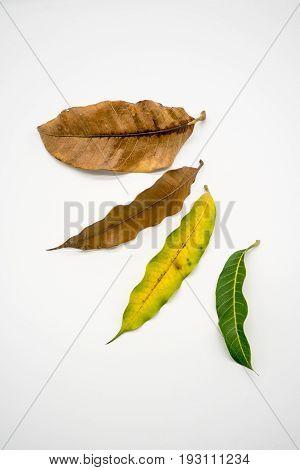 Concept Season Change Of Leaves