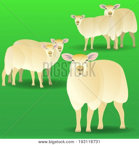 Herd of sheep on a pasture. Vector illustration on green background