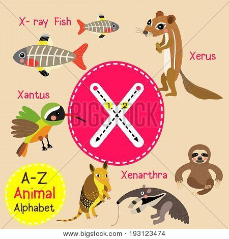 Cute children zoo alphabet X letter tracing of funny animal cartoon for kids learning English vocabulary vector illustration.