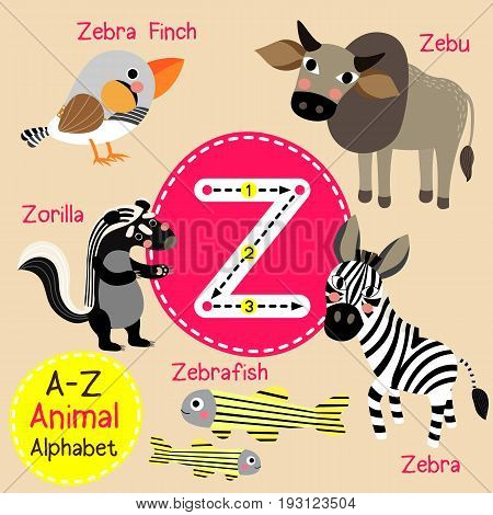 Cute children zoo alphabet Z letter tracing of funny animal cartoon for kids learning English vocabulary vector illustration.