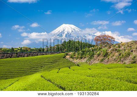 Fuji, Japan at Mt. Fuji and tea fields.