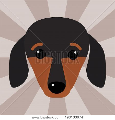 Little dachshund puppy cute head brown purebred mammal sweet dog young pedigreed animal breed vector illustration. Funny beauty friend domestic pet.