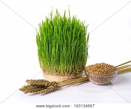 sprouts wheat isolated on a white background