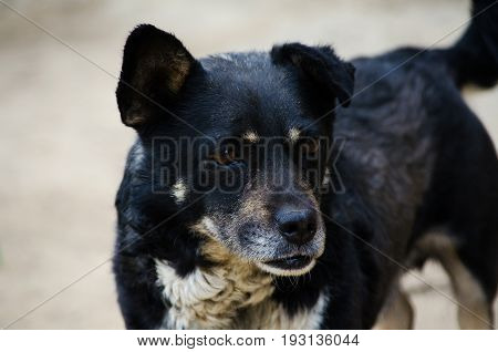 A Little Black Dog With Happy