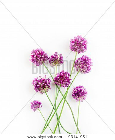 the flowers of Allium against a white background