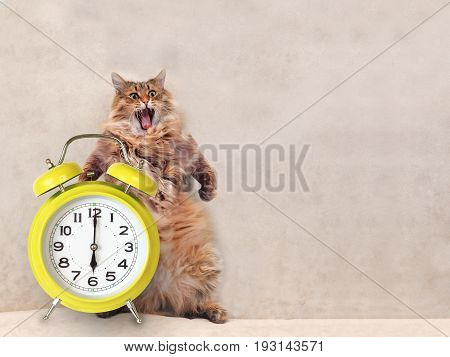 The Big Shaggy Cat Is Very Funny Standing.clock 4