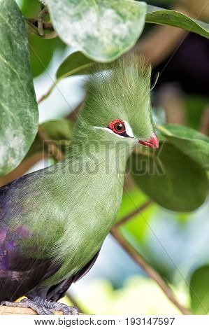 Bird Sitting On Tree Branch In Park