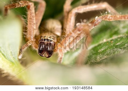 portrait of a spider. close . A photo