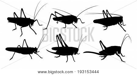 The Set of silhouettes of a locust.