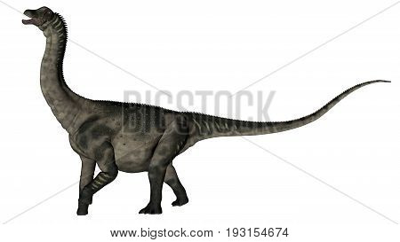 Antarctosaurus dinosaur roaring isolated in white background - 3D render