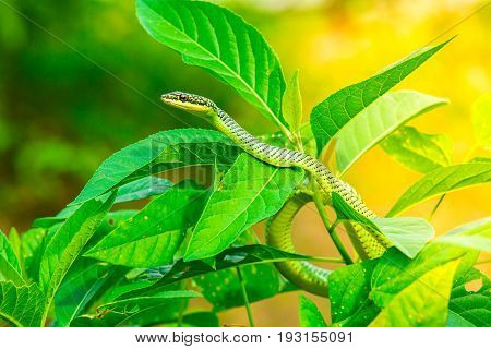 Green snake on leaf,Snake on a leaves with sunlight