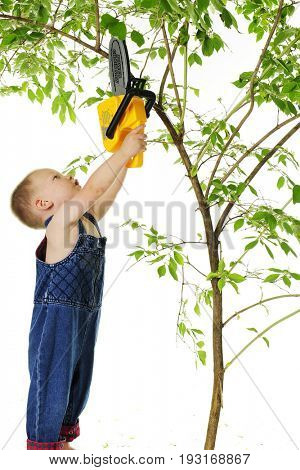 A tiny little boy stretching high to cut a limb off a tree with his toy chain saw.  On a white background.