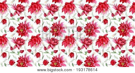 Wildflower Aquilegia flower pattern in a watercolor style isolated. Full name of the plant: Aquilegia. Aquarelle wild flower for background, texture, wrapper pattern, frame or border.
