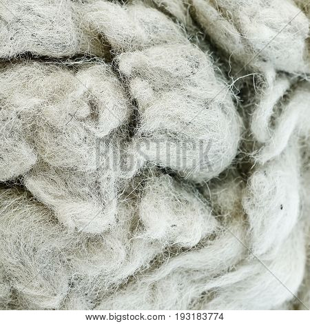 wool sheep background textureis raw material.Wool texture for background