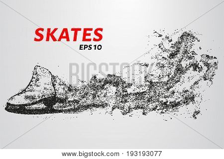 Skates Of Particles. Skates Consists Of Circles And Points.