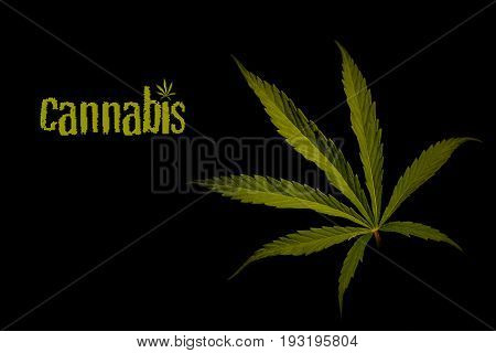 Leaves of marijuana on a black background. Hemp on a black background