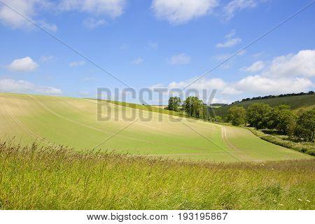 Wild Grasses And Pea Field