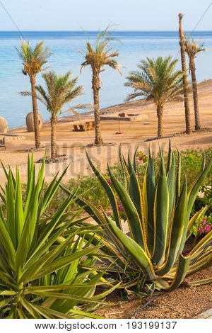 Egypt Dahab. Tropical shrubs and date palms on the background of the red sea and coral reef. Strong wind. Soft focus. Bright colors