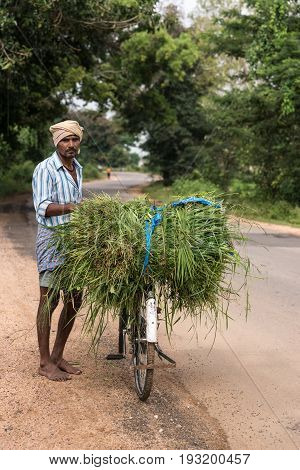Mysore India - October 27 2013: Man with turban and his bike loaded up with cut grass for his cow in Harohalli hamlet. Stands along rural road with green trees.