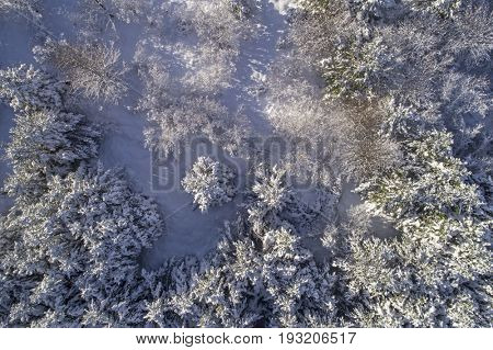 Aerial image of a snow covered forest