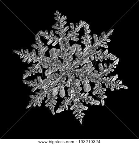 Snowflake isolated on black background. Macro photo of real snow crystal: large stellar dendrite with glossy relief surface, fine hexagonal symmetry and long, elegant arms with numerous side branches.