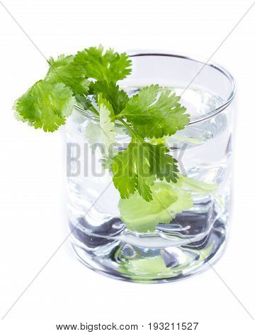 Fresh Cilantro In A Glass Of Water