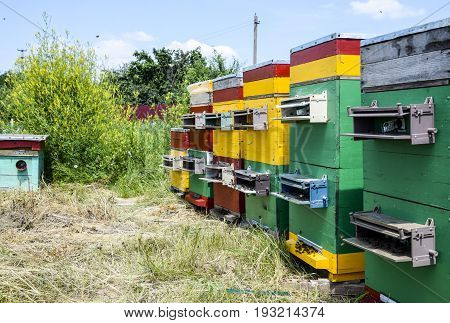 Beehive Beehives In The Apiary. Growing Bees To Get Honey. Bee Houses