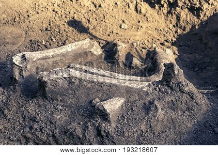 Archaeological excavations and finds (bones of a skeleton in a human burial) a detail of ancient research prehistory