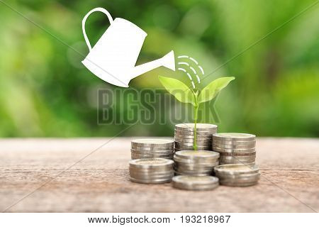 Money and plant with watering can and money tree Saving money concept financial savings to buy a housetrees growing in a sequence of germination on piles of coins Growth business money.