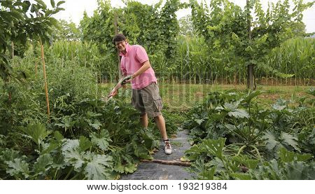 Sympathetic grower with pink t-shirt in the vegetable garden during harvesting