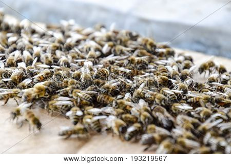 A Large Congestion Of Bees On A Sheet Of Cardboard. Swarming Of The Bees. Honey Bee.